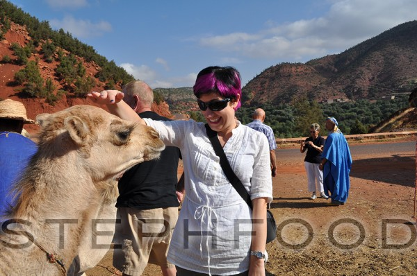 My new boyfriend, Salahaddin the camel.